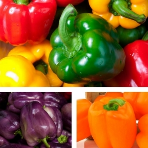 Red, Green, Yellow, Orange and Purple Bell Peppers